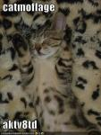 funny-pictures-cat-camoflauged-fur-blanket